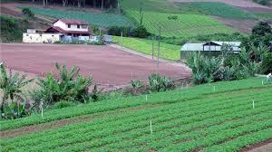 A importância do solo permeável