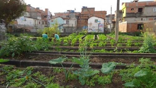 Agricultura Urbana: qualidade de vida