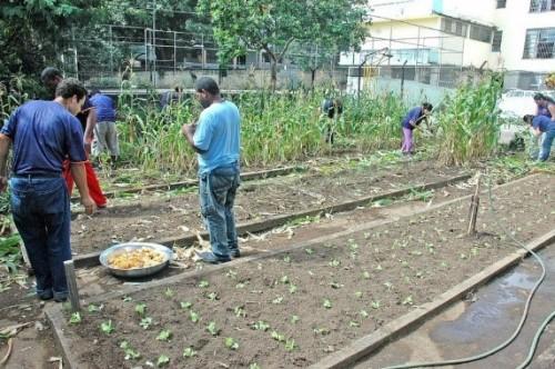 Agricultura Urbana: qualidade de vida 2