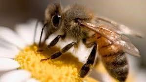 Pesticidas o perigo aumenta 2