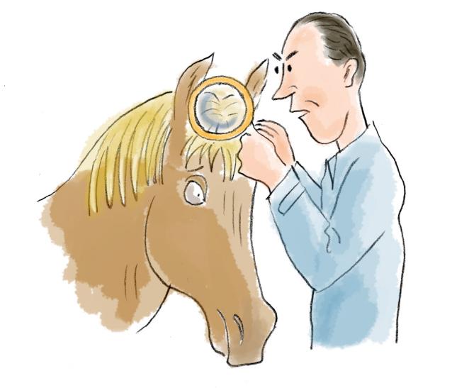 Chifre em cabeça de cavalo