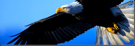 voo da águia