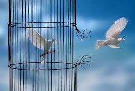 A gaiola do amor